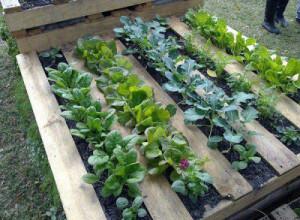 jardin-de-palettes